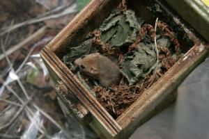 dormouse nest box boxes check