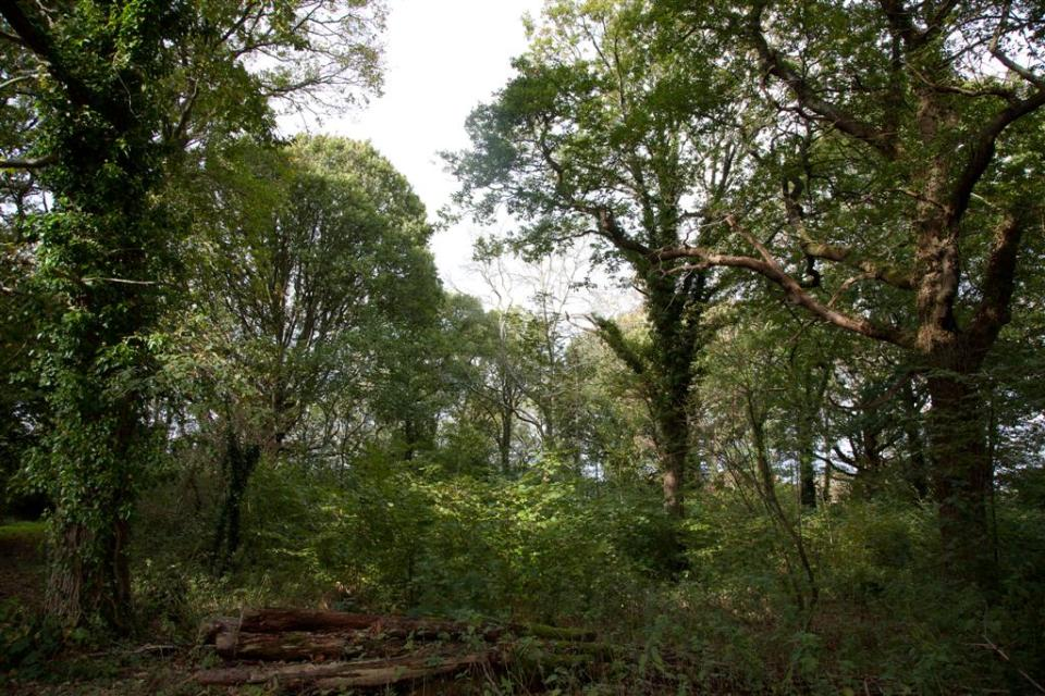 dormouse habitat broadleaved ancient woodland