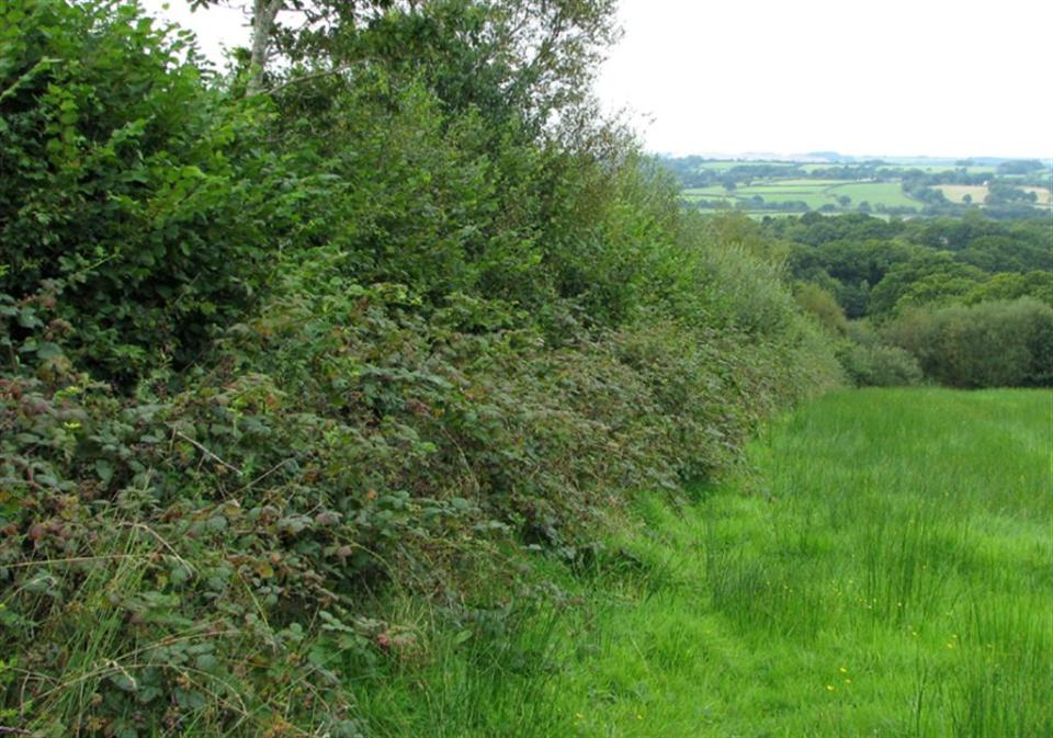 dormouse habitat scrub hedgerow